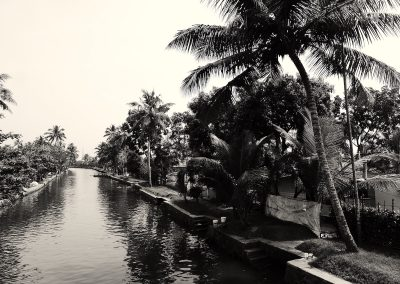 Lagoon and palms on the Allepey backwaters Kerala India in Black and white