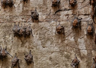 Bats in Stepwell