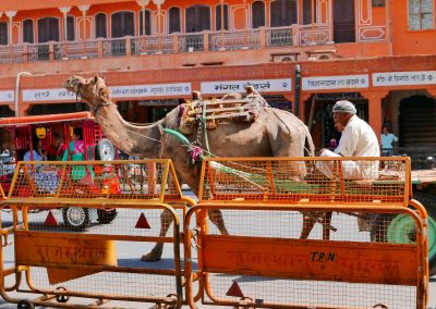 Camel driver in Jaipur The pink city