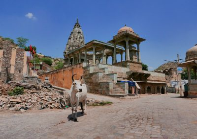 Cow and temple Amer Jaipur