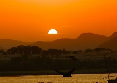 Flying foxes at sunset Udaipur