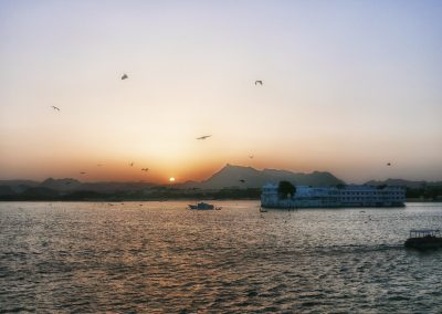 Flying foxes at sunbset over lake Pichola Udaipur
