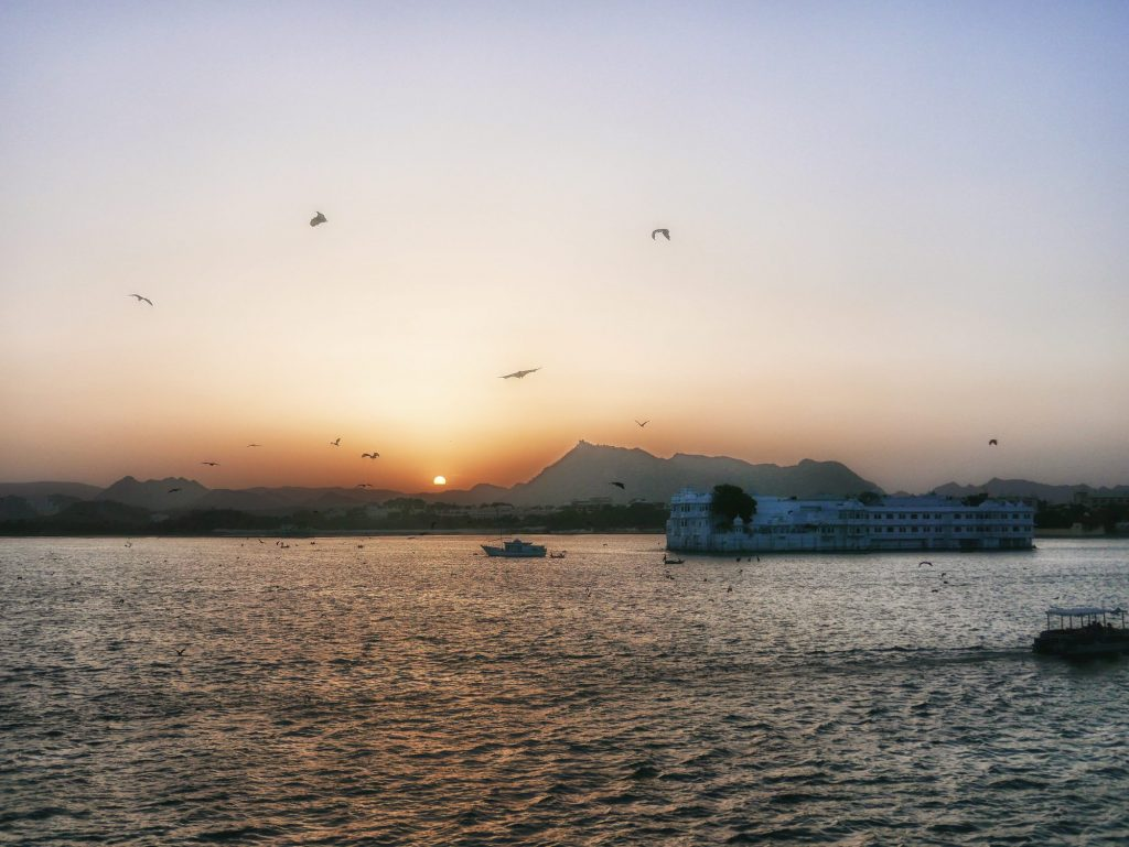 Flying fxes at sunbset over lake Pichola Udaipur