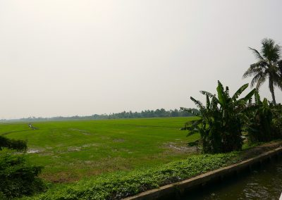 Paddy fields from the Allepey backwaters Kerala India