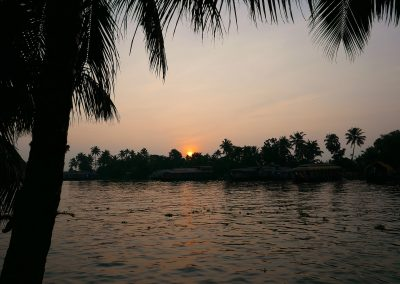 Palms in the sunset on the backwaters Kerala India