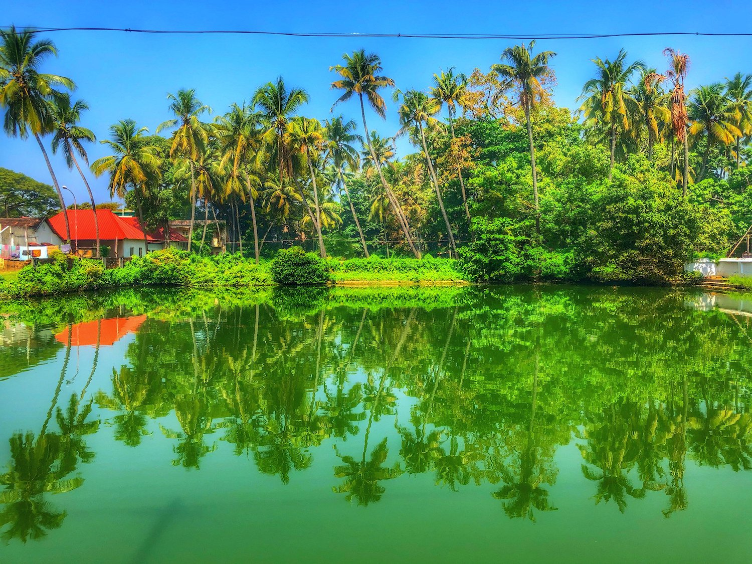 Lake & Palms next to temple Fort Kochi