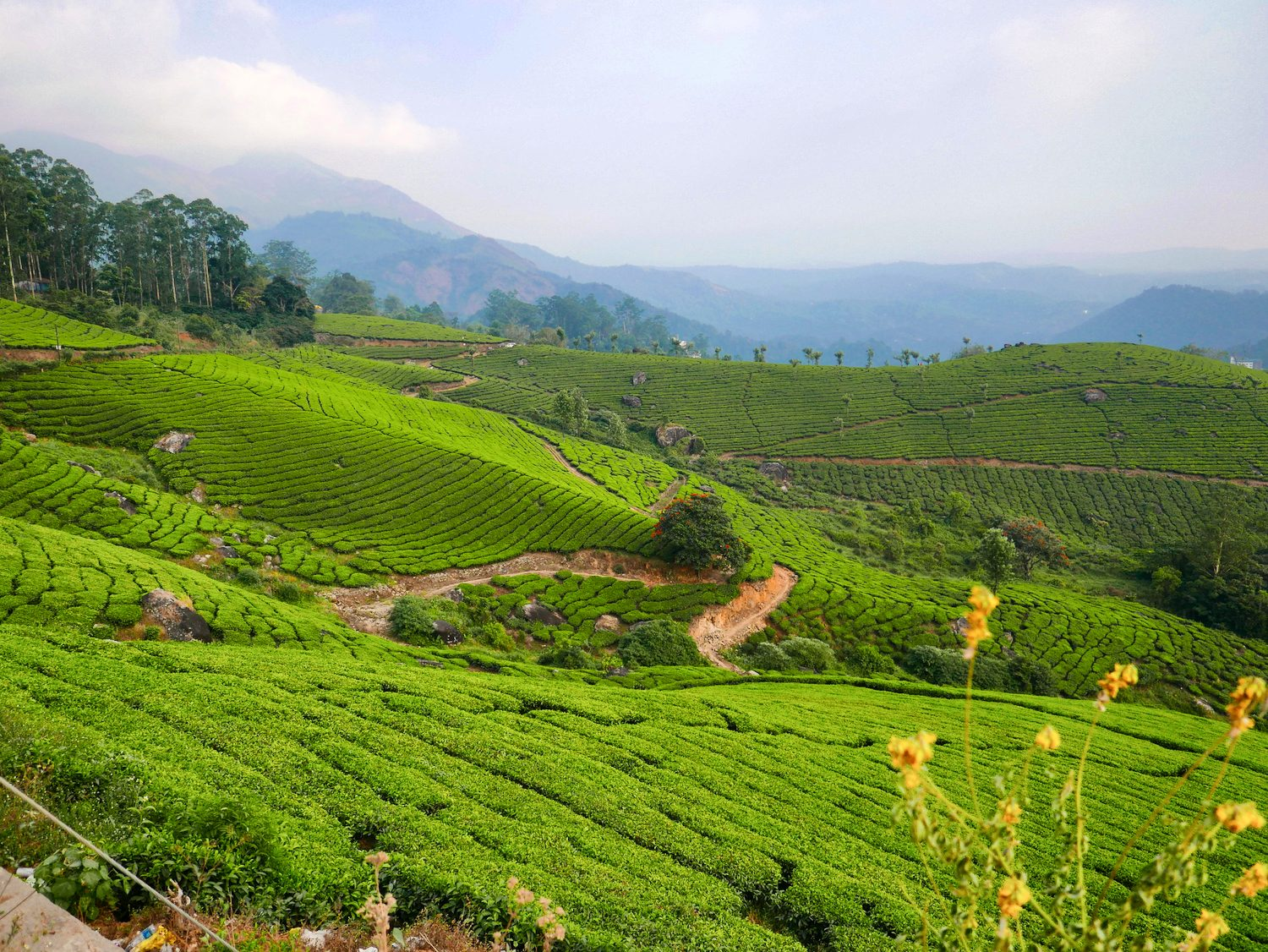 Munnar Tea estate views