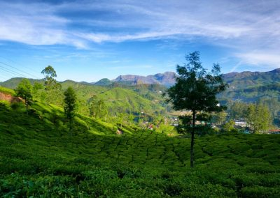 Munnar View to hills