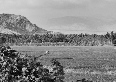 Near madurai Paddy field worker 2 bw