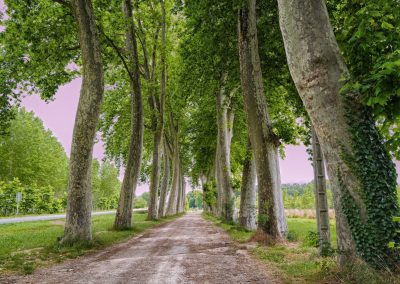 Verdun sur Garonne avenue of trees to river 1