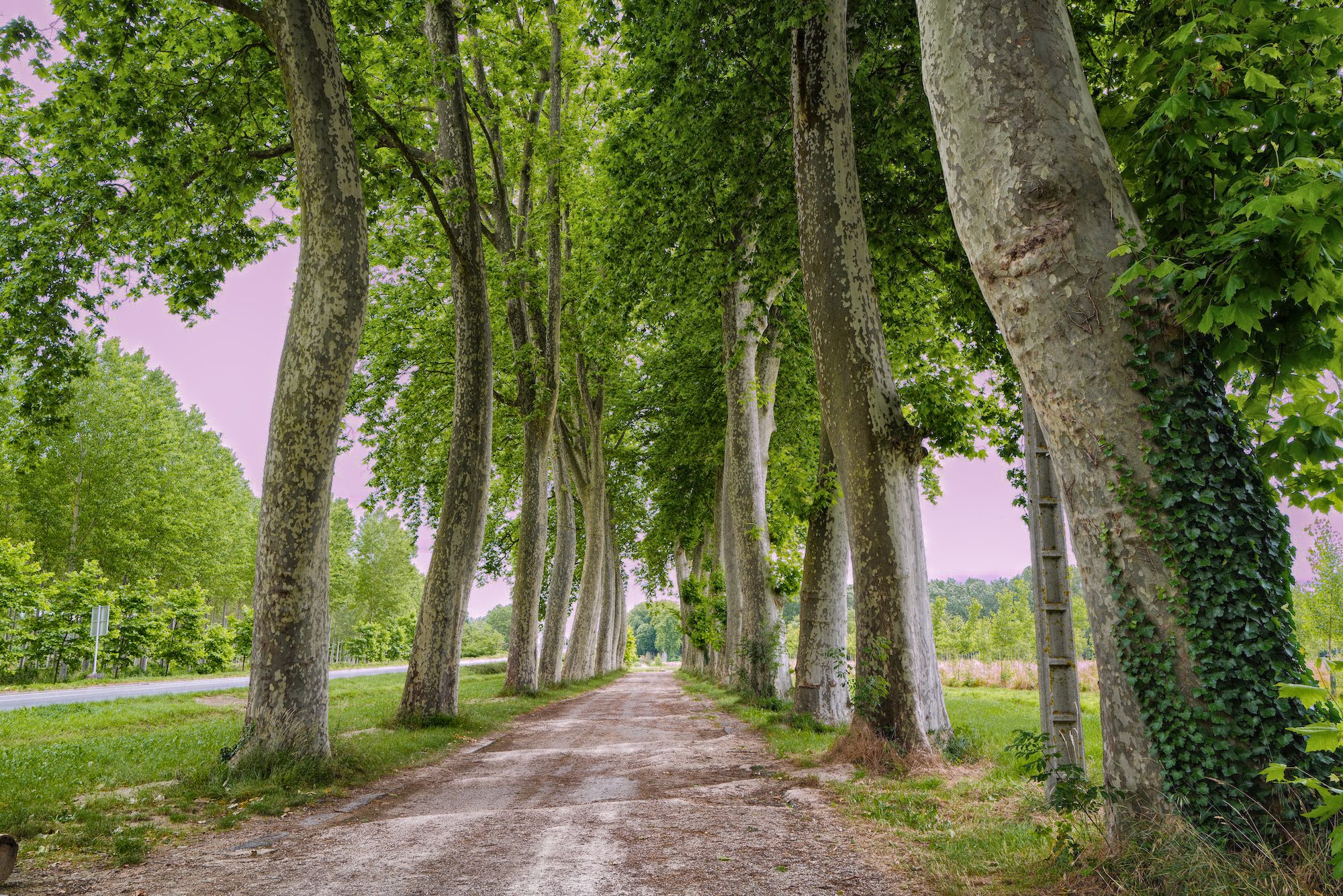 Verdun sur Garonne avenue of trees to river